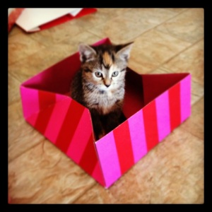 Sorry. Here's another kitten... in a box!